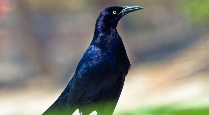 New Paper: The Grackle
